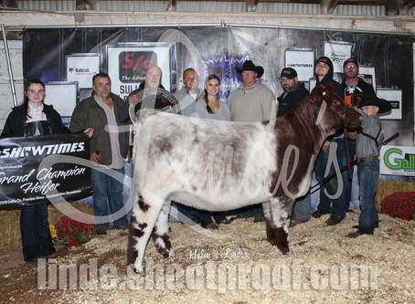 2019 Galia Co Preview Show