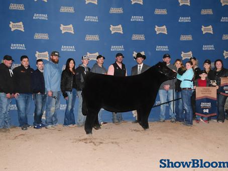 Arizona National Champion Steers