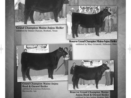Throwback Thursday- National Junior Maine-Anjou Show from 2007