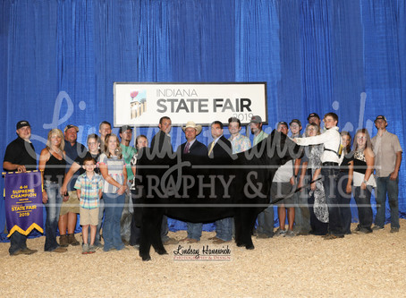 Indiana State Fair Champion Heifers