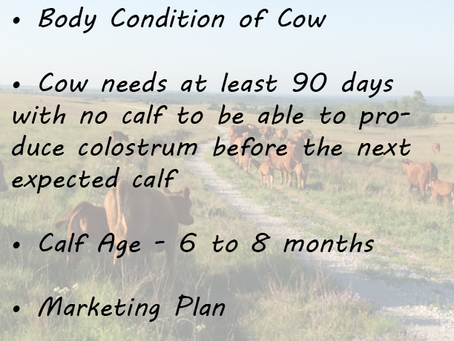 Weaning Age Reminders from Texas A&M Agrilife Extension