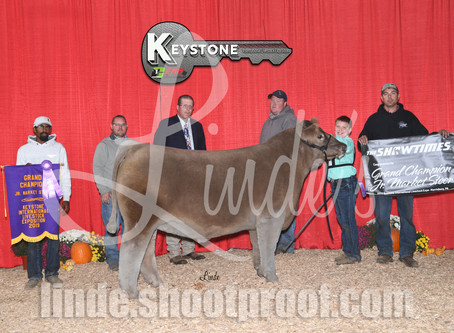 KILE Steer Winners