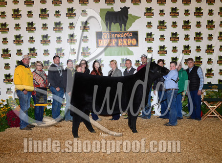 Top 5 Heifers at the Minnesota Beef Expo