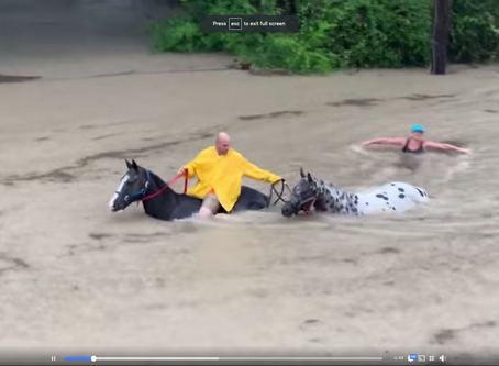 Daring Rescue of Stables During Houston Flooding