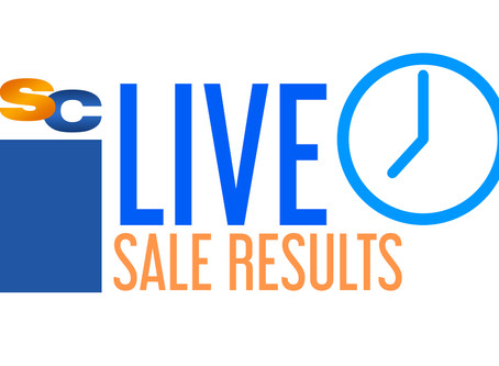 Live Cattle Sale Results