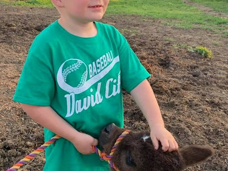 Cute Kids and Cattle - No Better Combination