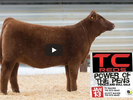 TC Reds Power Of The Pens Lot 1 Video