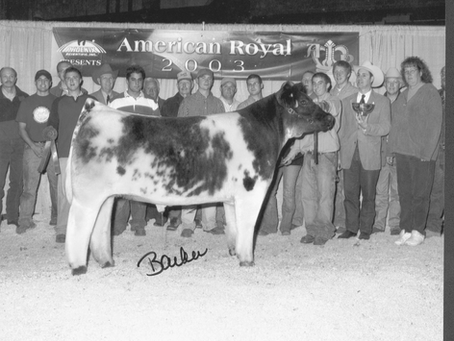 A Gallery of Past Champions from the American Royal