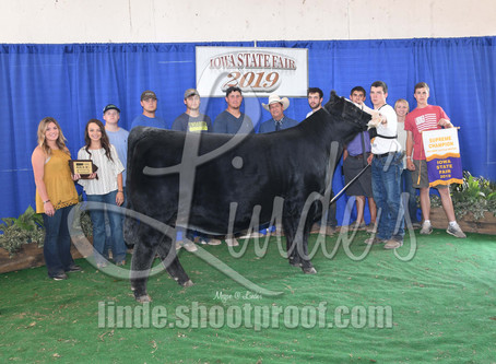 Top 5 FFA Heifers at Iowa State Fair
