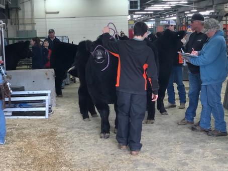 NWSS Jr Market Beef Check-In Is In Full Swing!