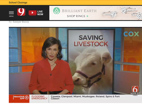 Oklahoma Cowboys Rescuing Livestock from Floods