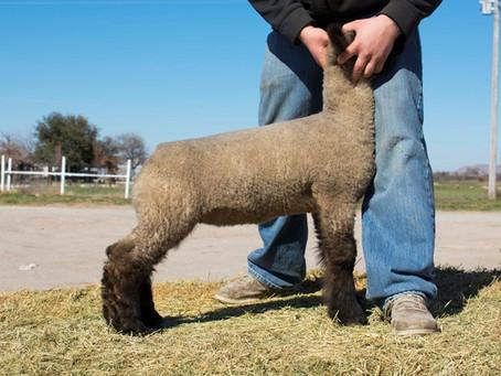 Harrell Club Lambs Online Sale Tonight