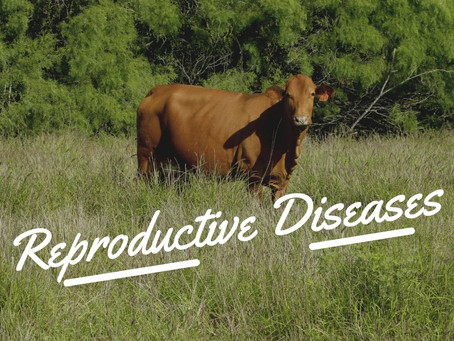 Some Basics on Repro Diseases from Texas AgriLife Extension