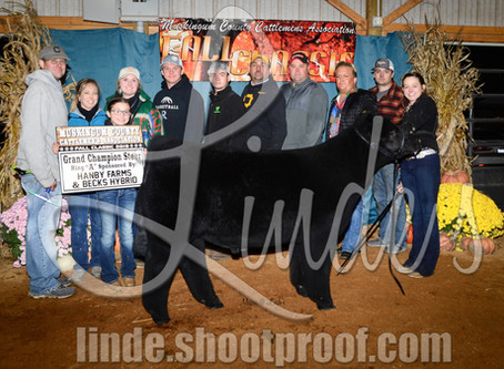 Top Steers at Muskingum Co Fall Classic