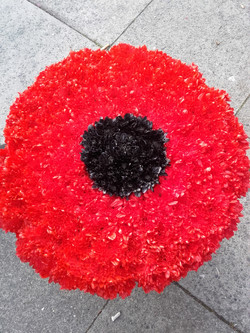 poppy flower tribute
