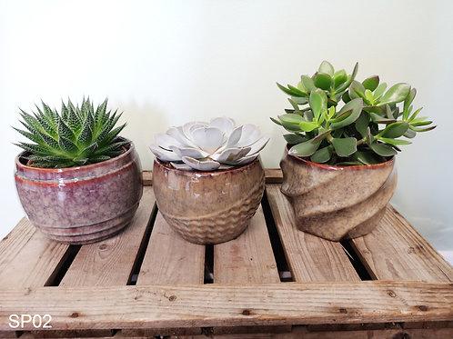 3x Succulents including decorative ceramic pots