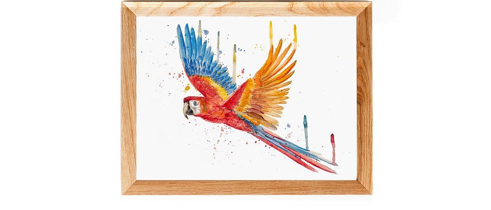 Papagai