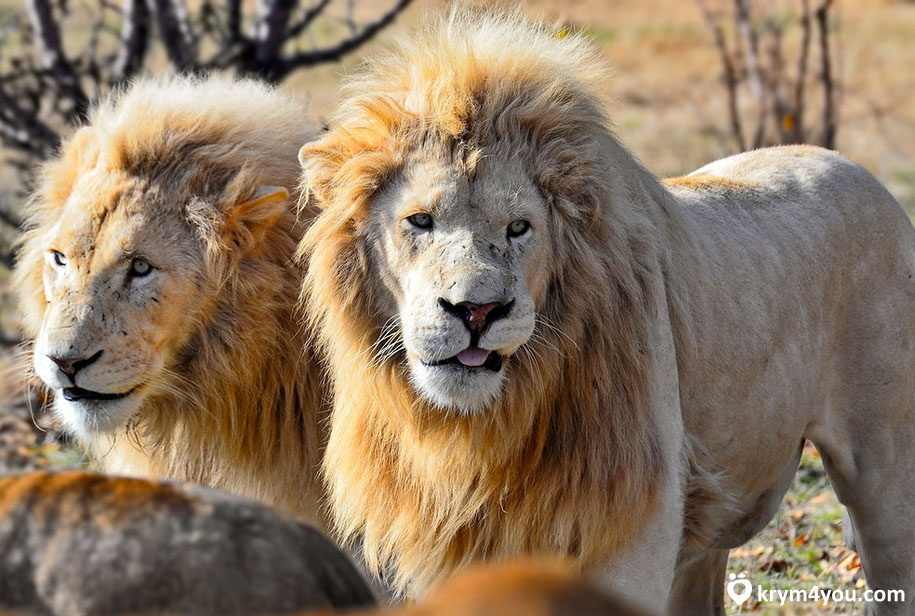 safari-park-tajgan-2_1532969335