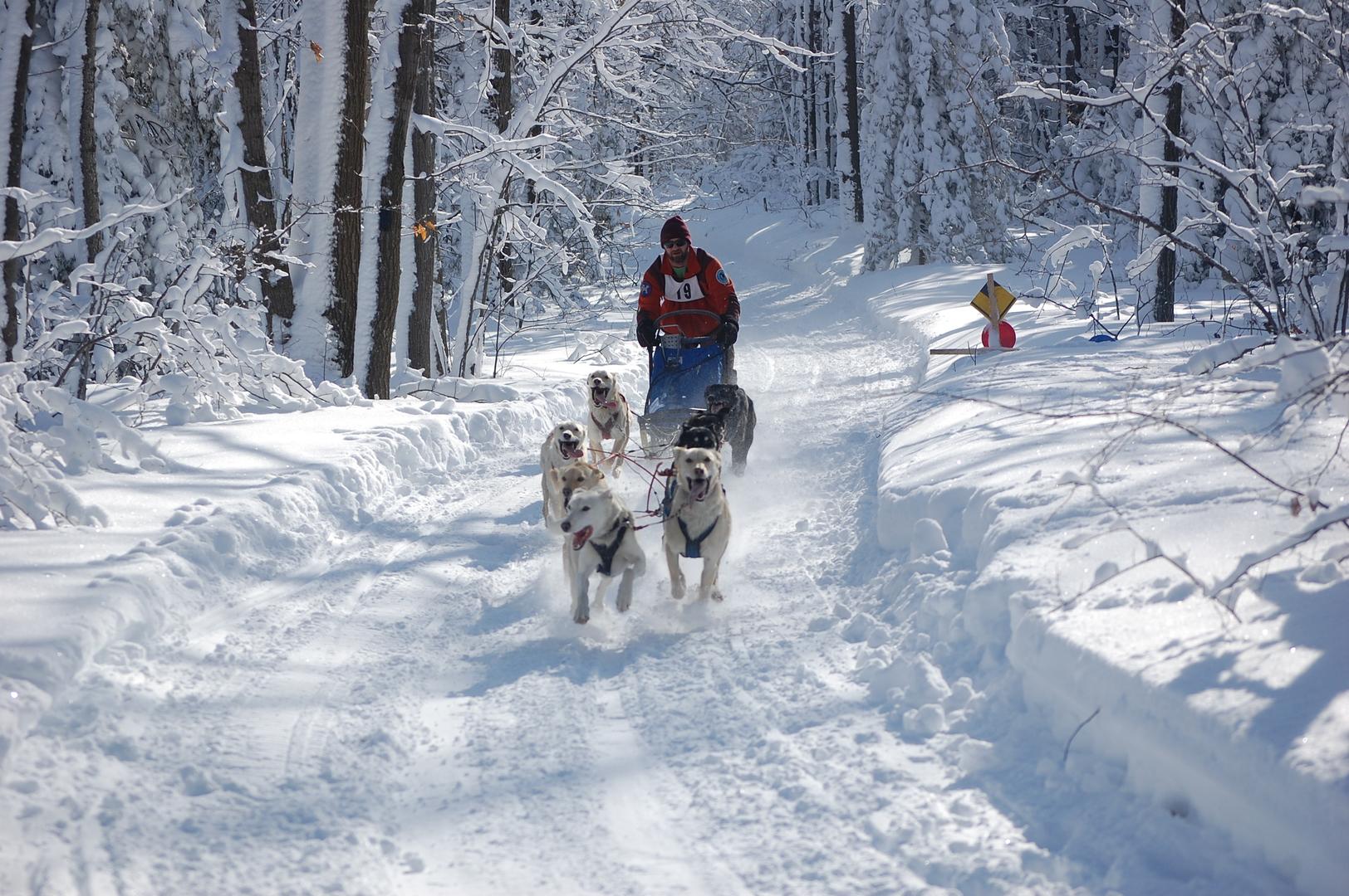sprint dog sled race_kalkaskawinterfest.
