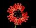 ВСЕХ МИЛЫХ ДЕВУШЕК с 8 Марта - цветы, букеты, поздравления!