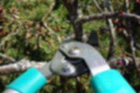 Boise Idaho Pruning Company