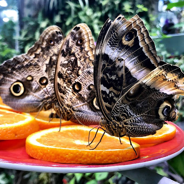 You Give Me Butterflies.jpg