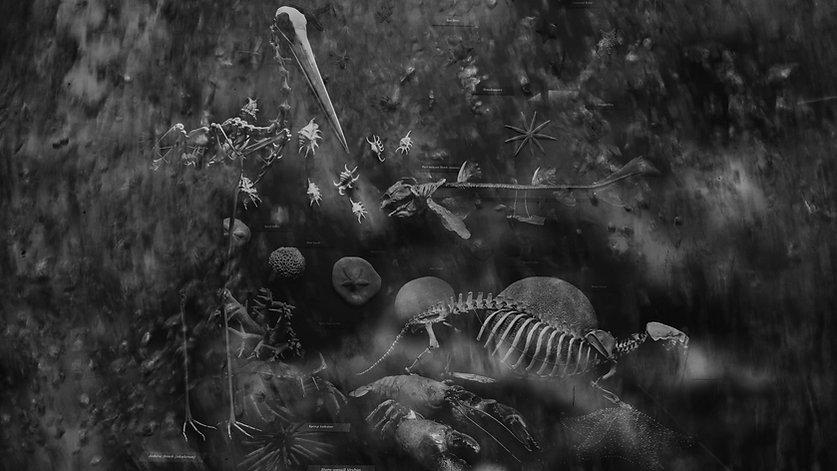 Skeleton Display #1732.jpg