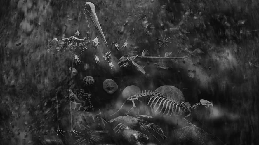 Skeleton Display #1732