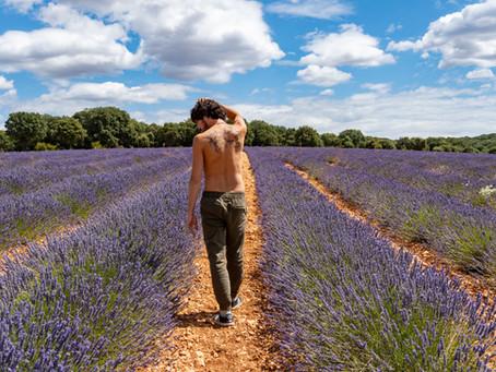 Los campos de lavanda de Mecerreyes en el corazón del Parque Natural El Sabinar de Arlanza en Burgos
