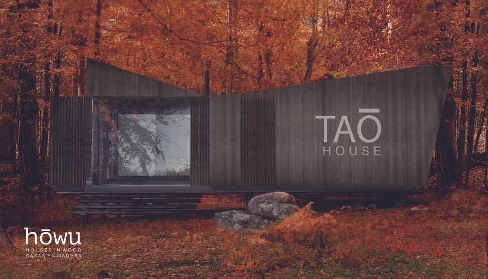 cat TAO-01.jpg