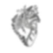 anatomical_heart_png_36885.png