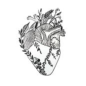 anatomical_heart_png_36885.png