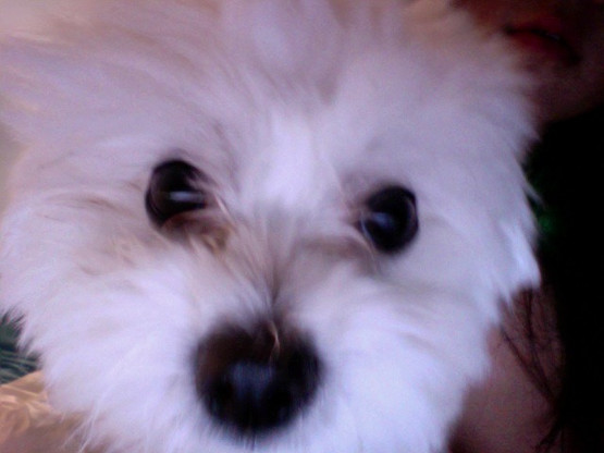 Coco on Oct. 17, 2010