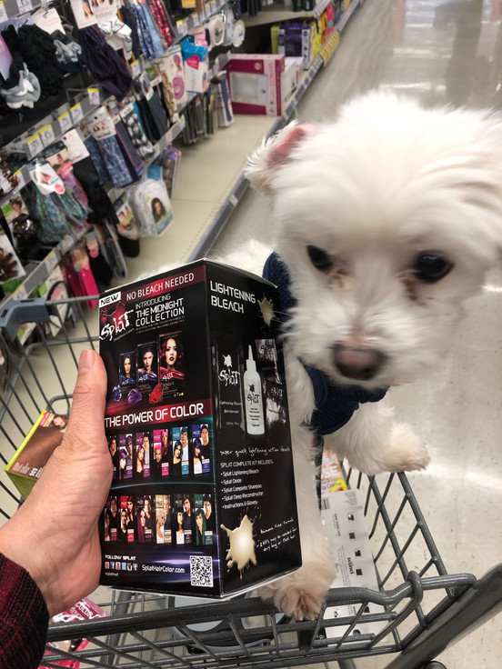 Shopping with Coco~