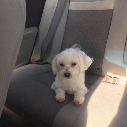 Coco in the car on April 25, 2017