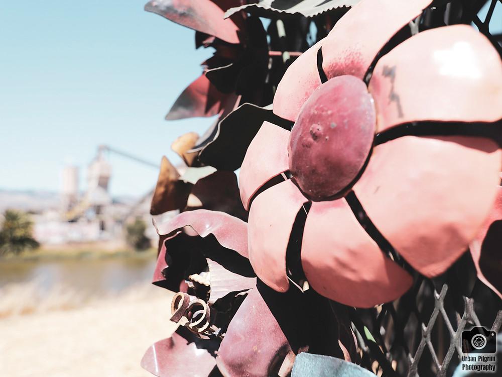 Metal flower sculpture. Petaluma River in background.