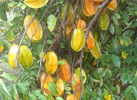 Fresh Fruit Picks of the Day