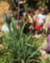 romema green house 1 .JPG