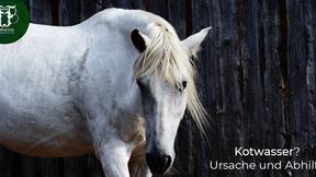 Kotwasser beim Pferd: Ursachen und Abhilfe