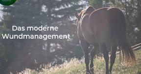 Modernes Wundmanagement beim Tier: Behandlungskonzepte nach aktuellem Stand der Wissenschaft