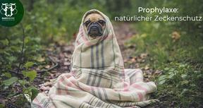 """""""Natürliche"""" Zecken-Prophylaxe beim Hund jetzt starten!"""