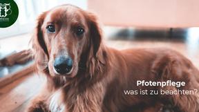 Pfotenpflege beim Hund: Tipps für gesunde Hundepfoten rund ums Jahr