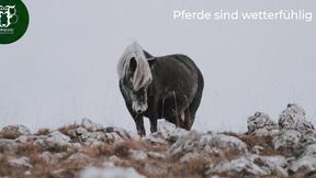 Wetterfühligkeit beim Pferd: Wenn das Wetter krank macht!