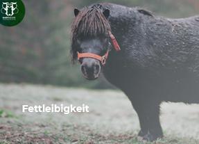 """Übergewicht beim Pferd: Nur ein kleiner """"Schönheitsfehler"""" oder ein ernstes Gesundheitsrisiko?"""