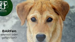 BARF – ein gefährlicher Trend oder eine sinnvolle Ernährungsmethode für Hunde?