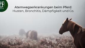 Atemwegserkrankungen beim Pferd: Husten, Bronchitis, Dämpfigkeit und Co.