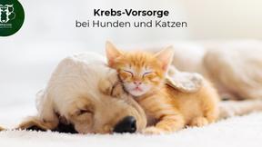 Krebs bei Hund und Katze: Vorbeugen, erkennen und behandeln