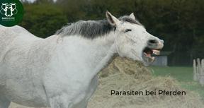 Kleine Schmarotzer: Parasiten beim Pferd
