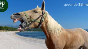 Zahngesundheit beim Pferd: Wissen rund um das Pferdegebiss