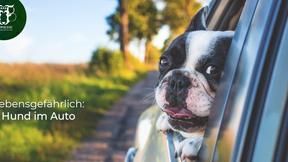 Todesfalle Auto - Lebensgefahr bei Hitze!